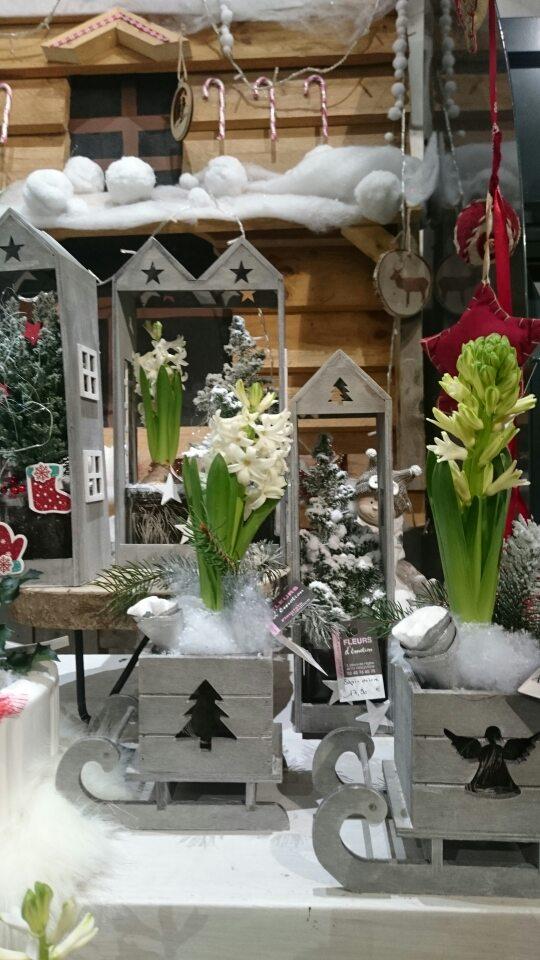 Jacinthes - Fleurs d'émotion - Noël 2018